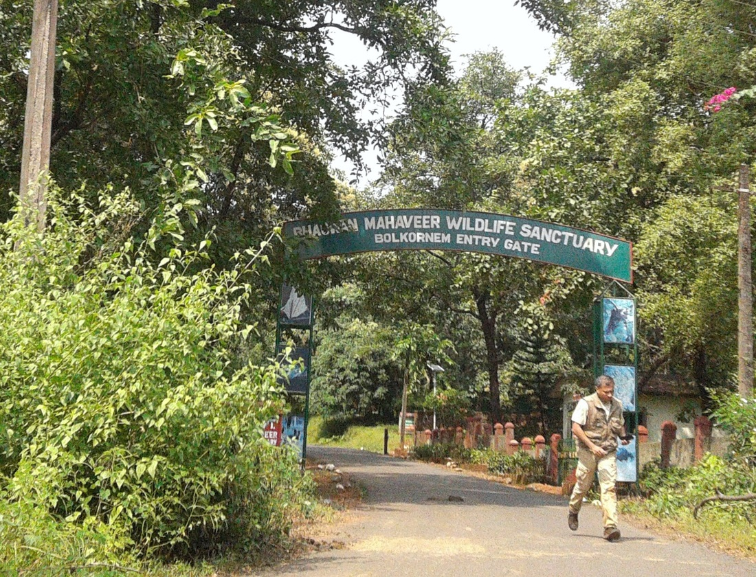 Bhagwan Mahavir Wildlife Sanctuary Goa